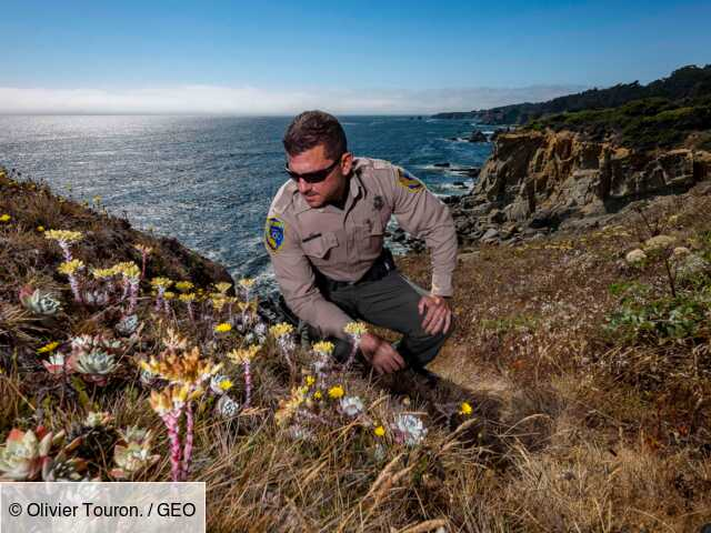Aux Etats-Unis, enquête sur un stupéfiant cartel de plantes grasses