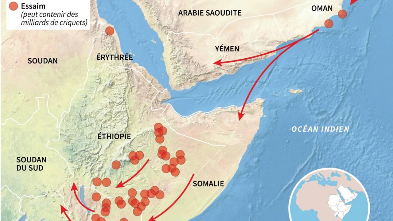 """Somalie: l'invasion des criquets déclarée """"urgence nationale"""""""