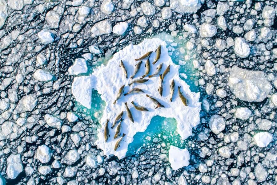Sieste glacée