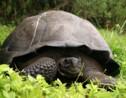 Galápagos : une expédition sur les traces des tortues géantes disparues