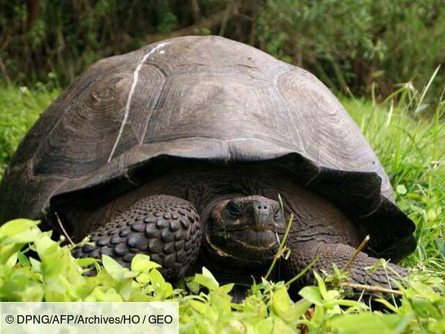 Mission aux Galapagos en quête de tortues géantes sur l'ancienne route des pirates