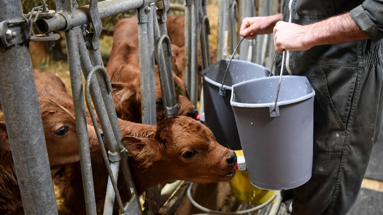 Renouveler les générations d'agriculteurs, un défi pour nourrir l'Europe