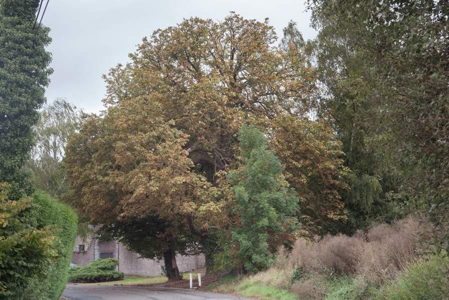 Belgique : l'arbre de la liberté