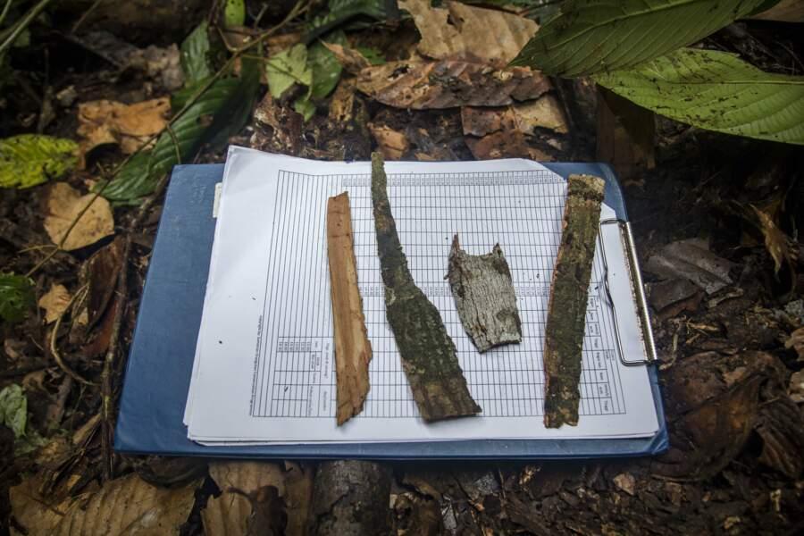 La forêt indonésienne est leur garde-manger