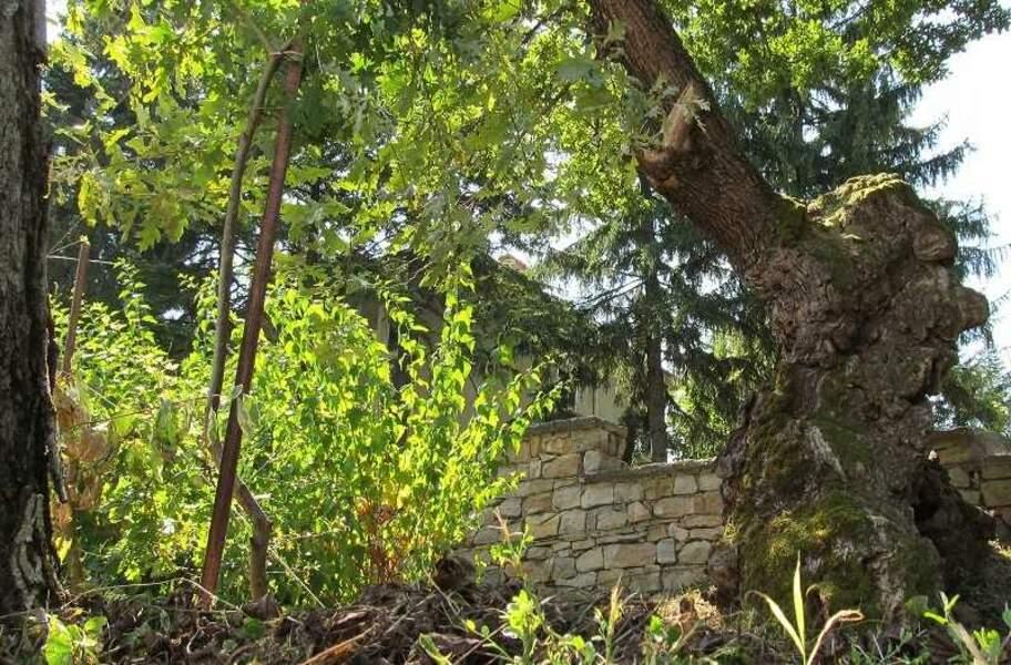 Bulgarie : Le chêne vénérable du village de Novo selo