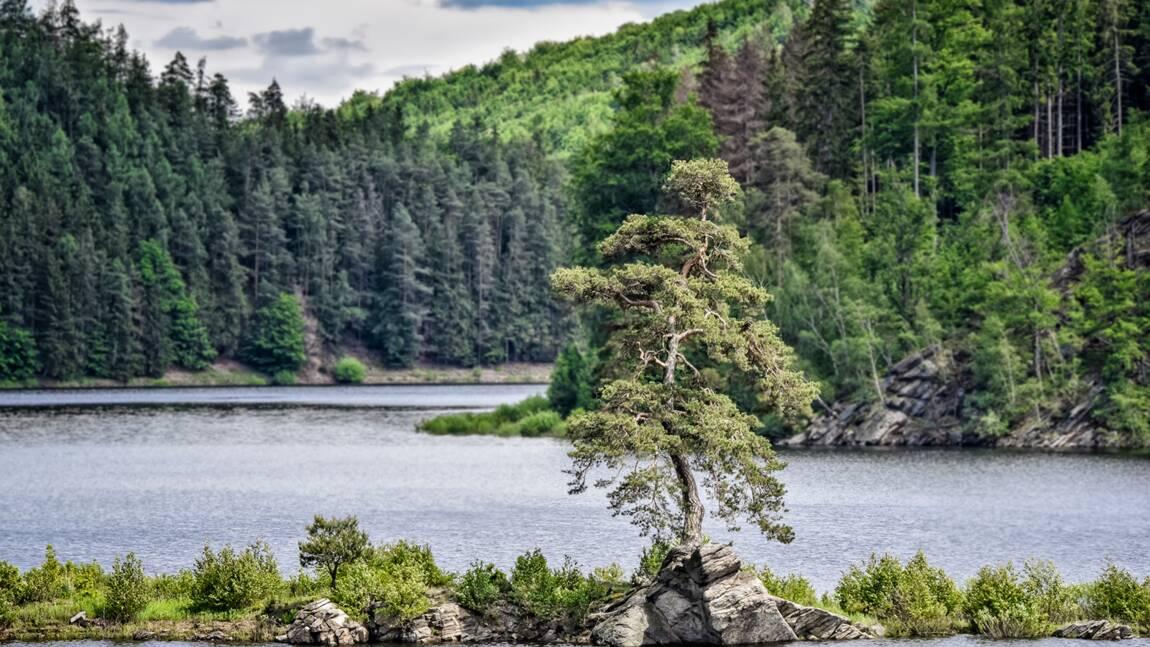 Le concours de l'arbre européen de l'année dévoile son palmarès 2020