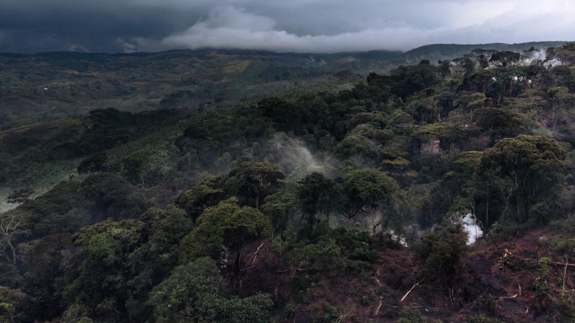 RDC: un chef rebelle pygmée condamné à 15 ans de prison pour déforestation