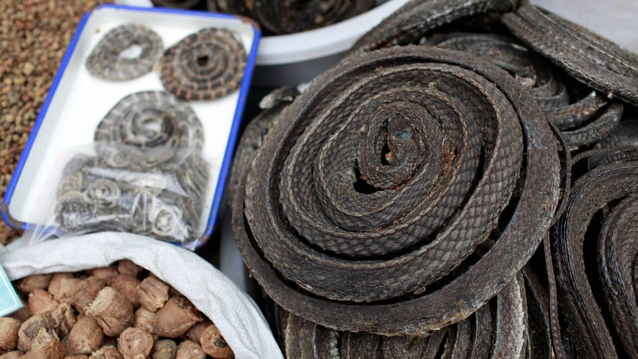 Coronavirus : des spécialistes appellent à une interdiction permanente du commerce de faune sauvage