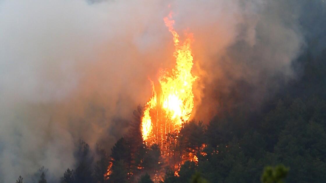 Tempête Hervé en Corse: plus de 1.000 hectares brûlés dans un incendie
