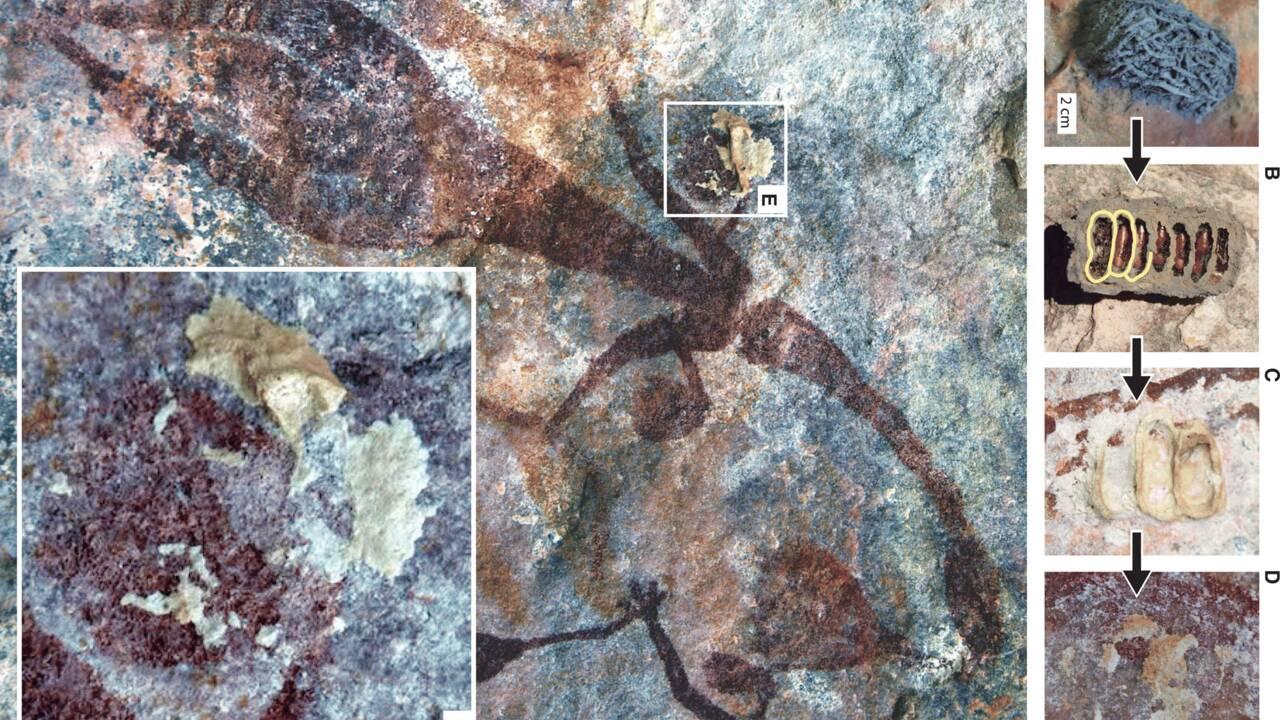 Australie : des peintures rupestres aborigènes datées grâce à des guêpes maçonnes