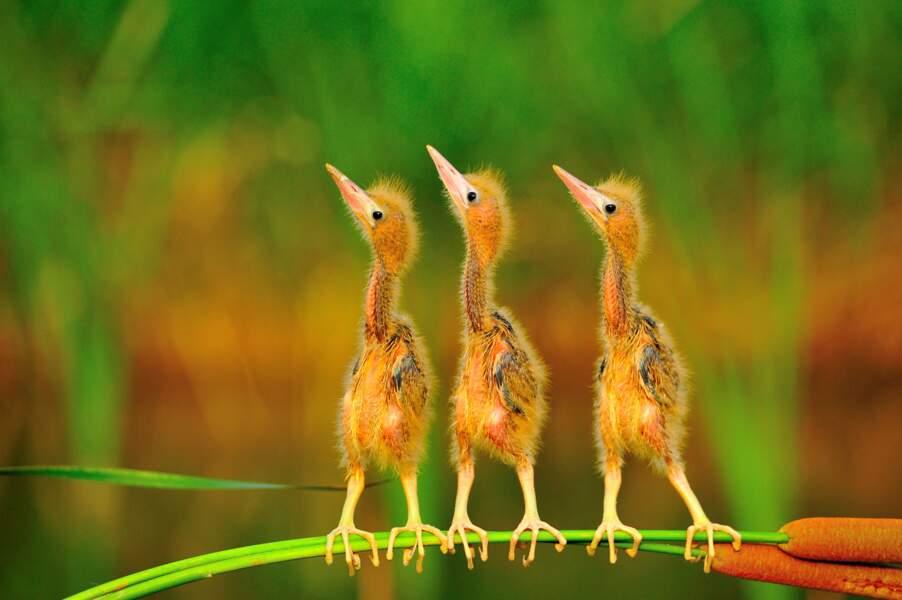 Trio décoiffant