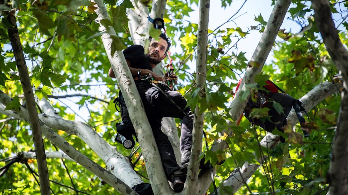 Thomas Brail, le militant perché qui fait avancer la cause des arbres