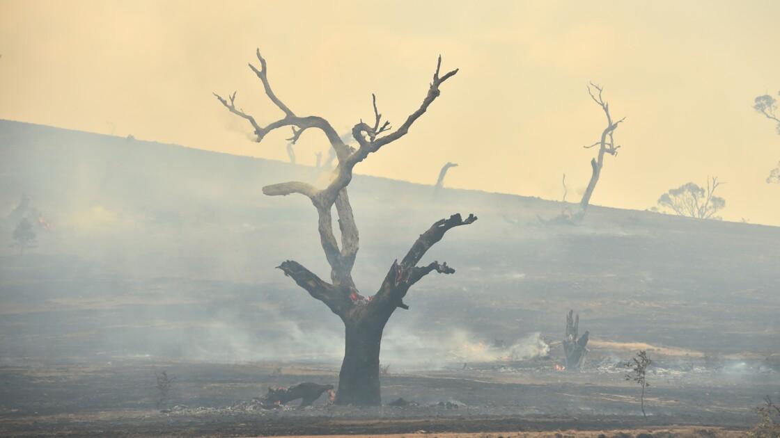 Australie: la pluie tombe, contribuant à mettre fin aux incendies