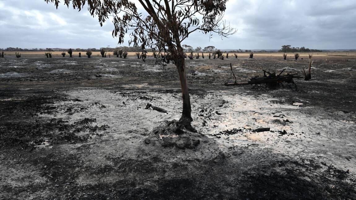 Australie: la pluie devrait mettre un terme à la crise des feux de forêts