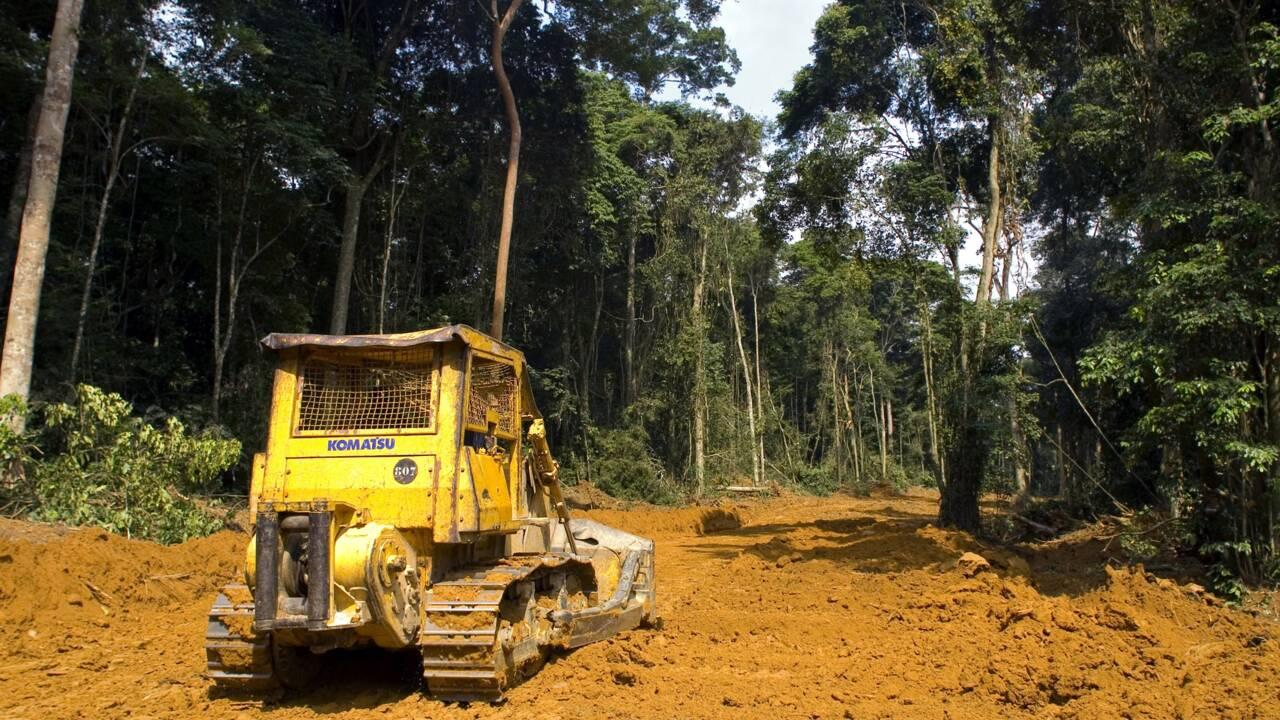 Des banques françaises accusées de financer des projets liés à la déforestation