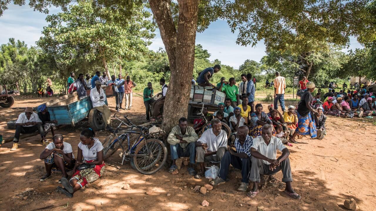 En Afrique australe, touchée par la crise climatique, des hommes et des bêtes aux abois