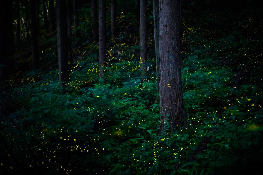 Des lumières dans la forêt
