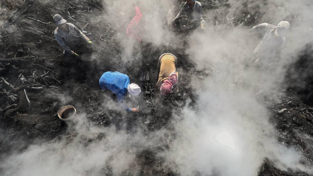 En Egypte, les courageux artisans du charbon de bois