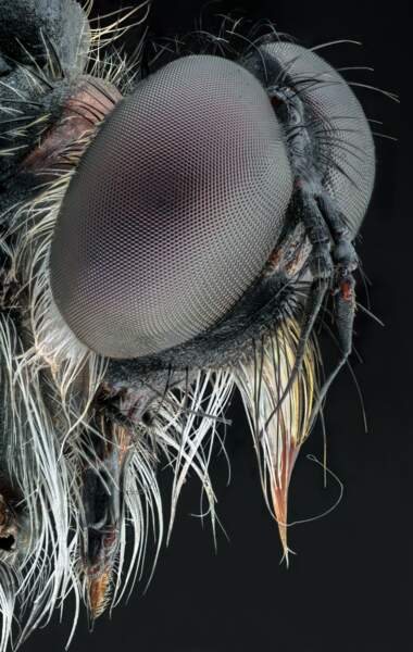 Dans les yeux d'une mouche