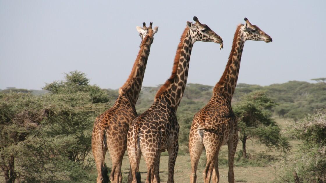 En Tanzanie, la nature reste reine