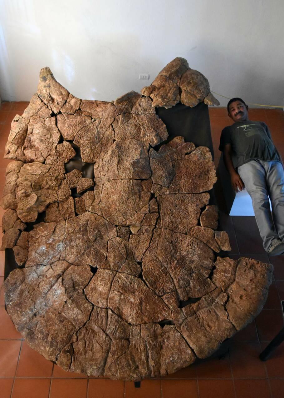 Des fossiles lèvent le voile sur l'une des plus grandes tortues ayant vécu sur Terre