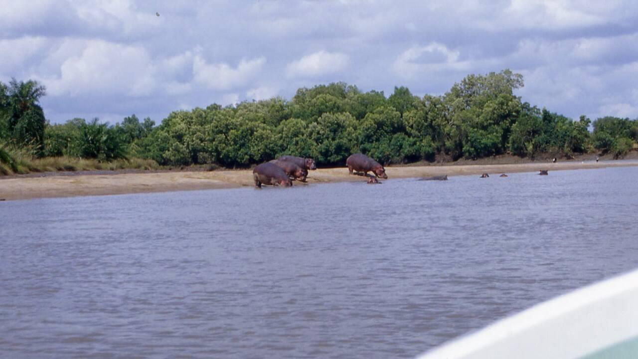 En Tanzanie, cinq sanctuaires à explorer