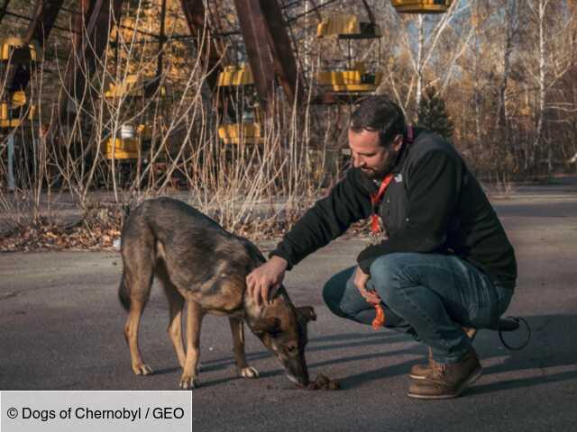 Tchernobyl : l'histoire méconnue des chiens qui ont survécu à la catastrophe nucléaire