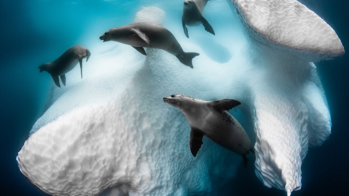 Les plus belles photos sous-marines primées par l'Underwater Photographer of the Year 2020