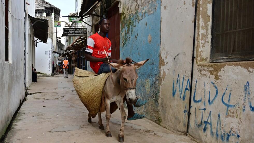 Le Kenya interdit l'abattage controversé d'ânes