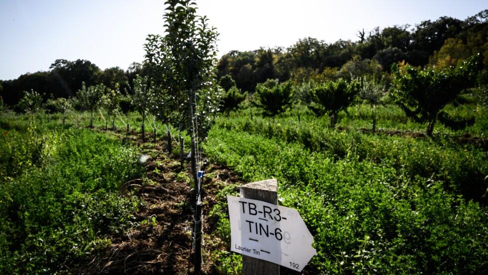 L'agroécologie, mille définitions pour une agriculture plus propre