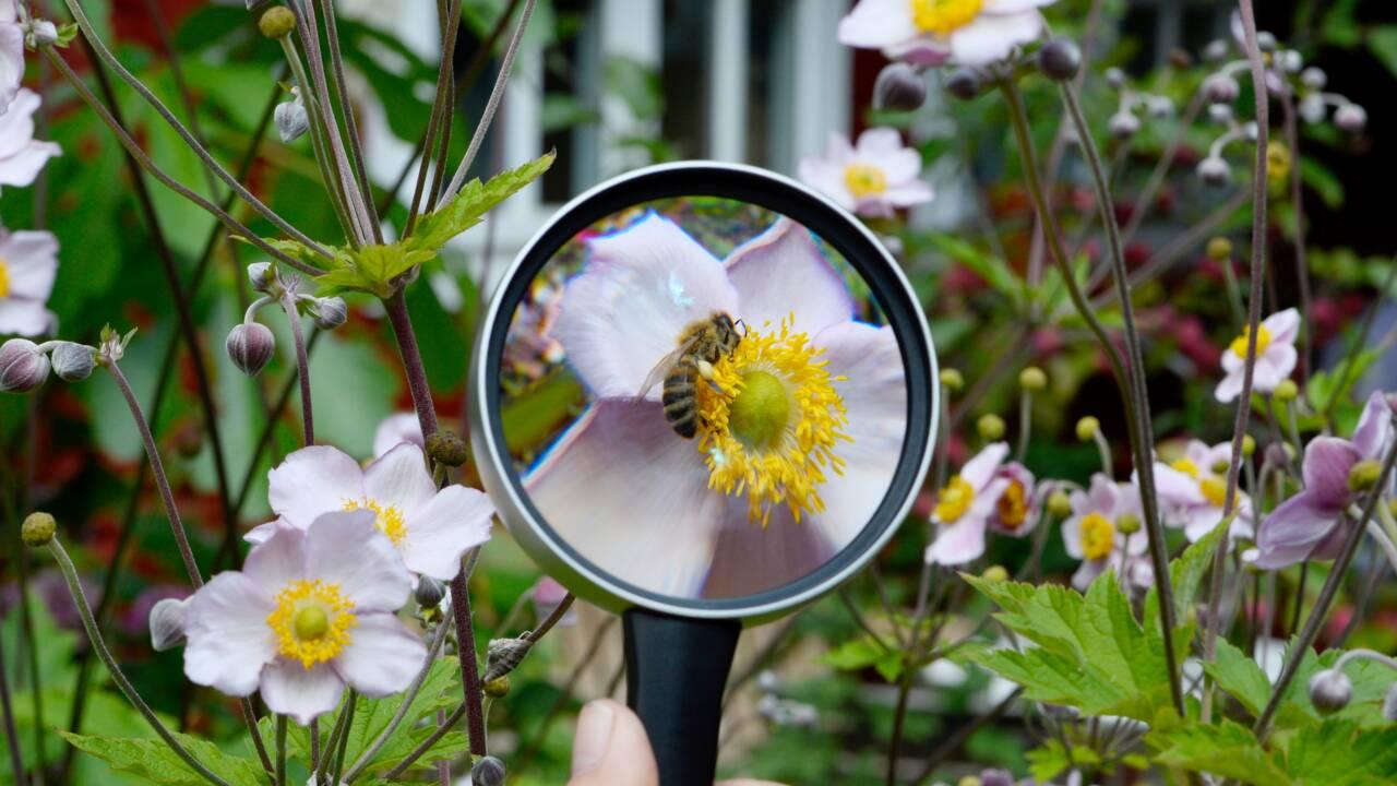 Biodiversité: petit à petit, un plan se dessine pour 2050