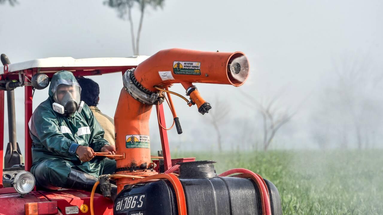 Au Pakistan, la pire invasion de criquets depuis près de 30 ans