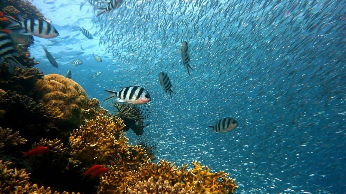 Google crée des caméras pour surveiller les poissons et mieux étudier les fonds marins