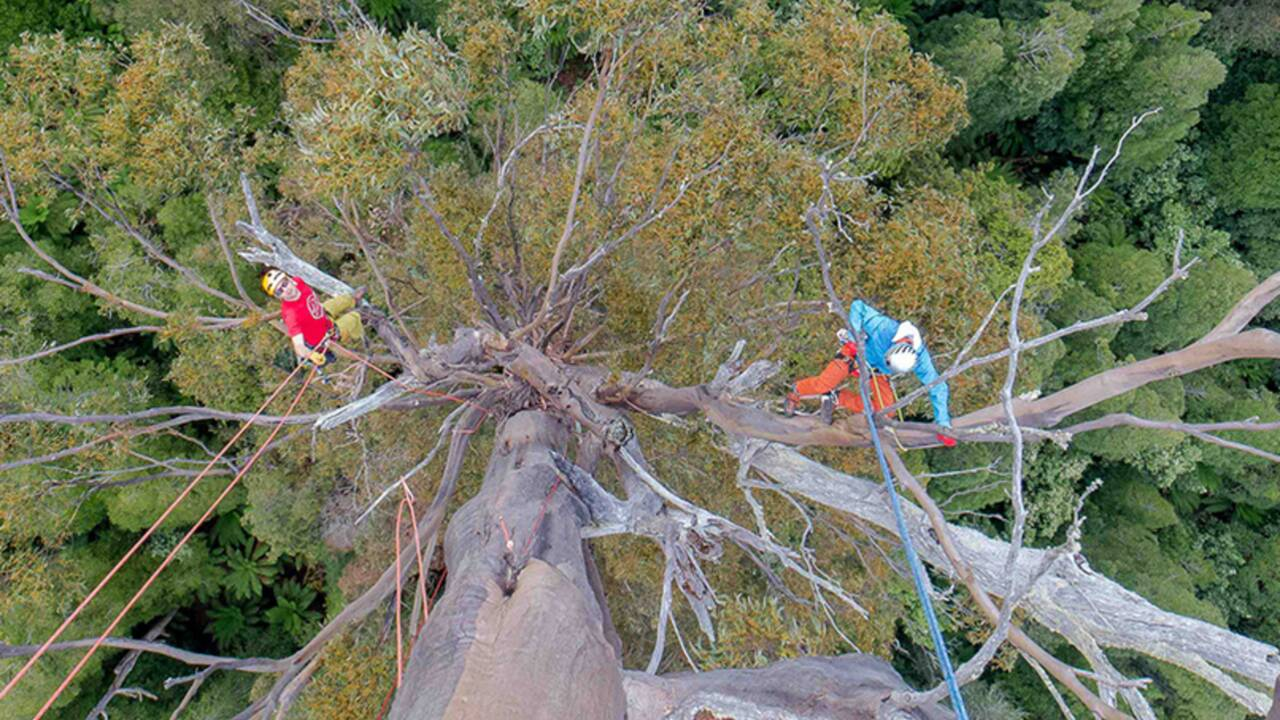 Les bons gestes pour grimper aux arbres sans les abîmer
