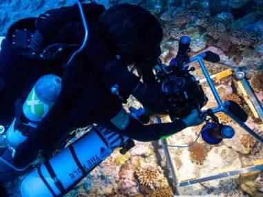 Ils font la lumière sur le corail des ténèbres