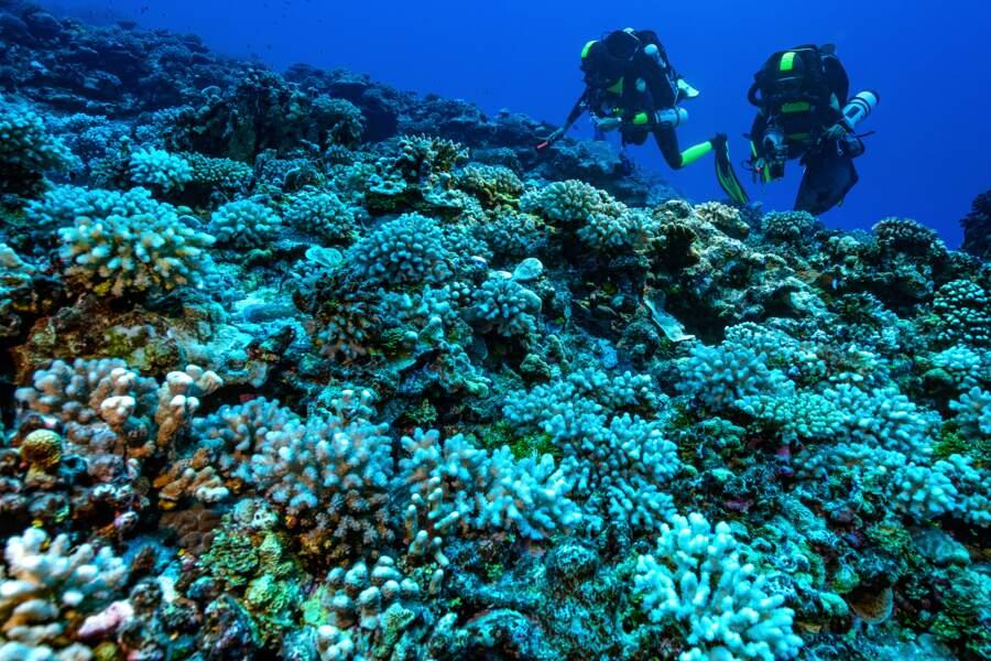 Champs de coraux