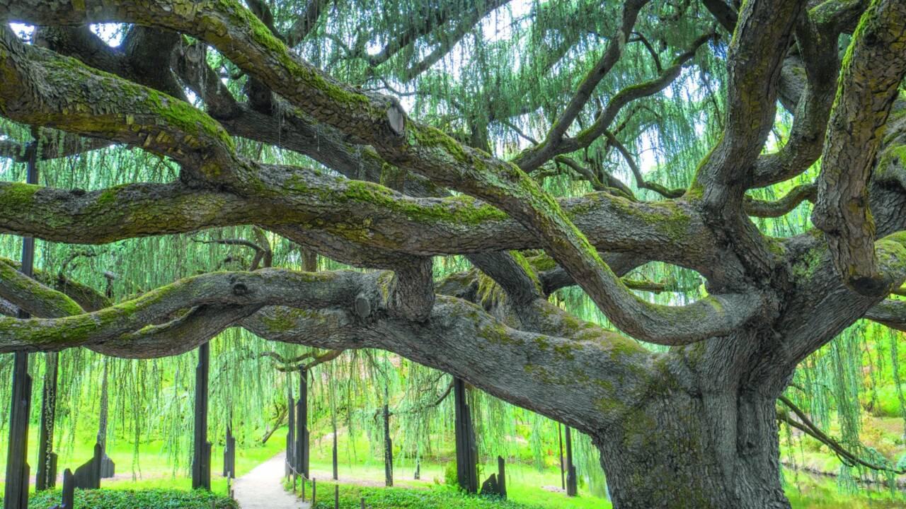 A la découverte des jardins remarquables de la région Île-de-France
