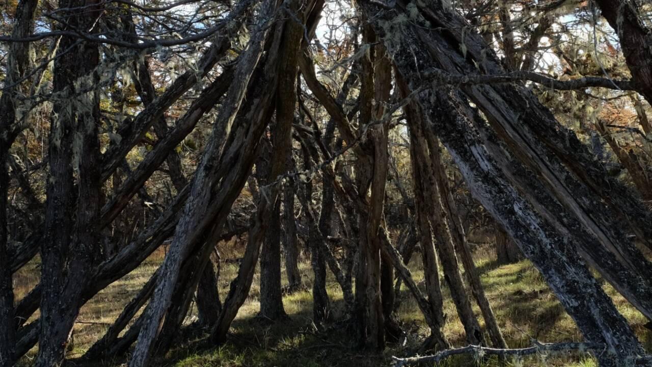 Vagues, vents, animaux… En Patagonie, elle collecte les sons d'un monde oublié