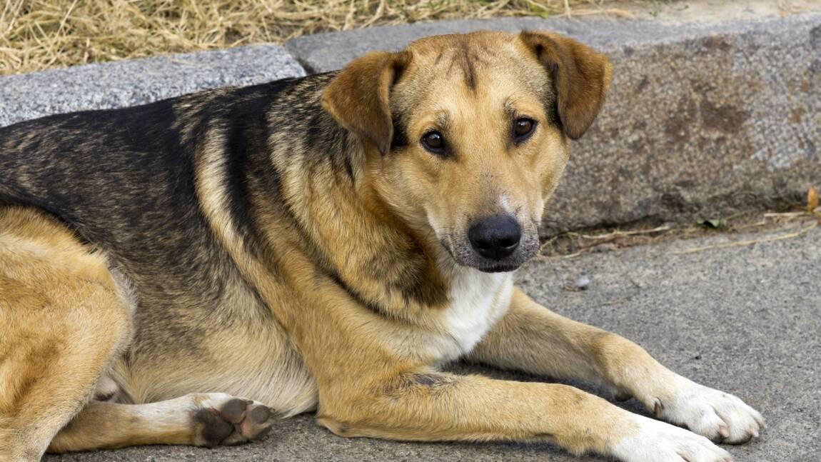 En Chine, des animaux livrés à eux-mêmes à cause du coronavirus
