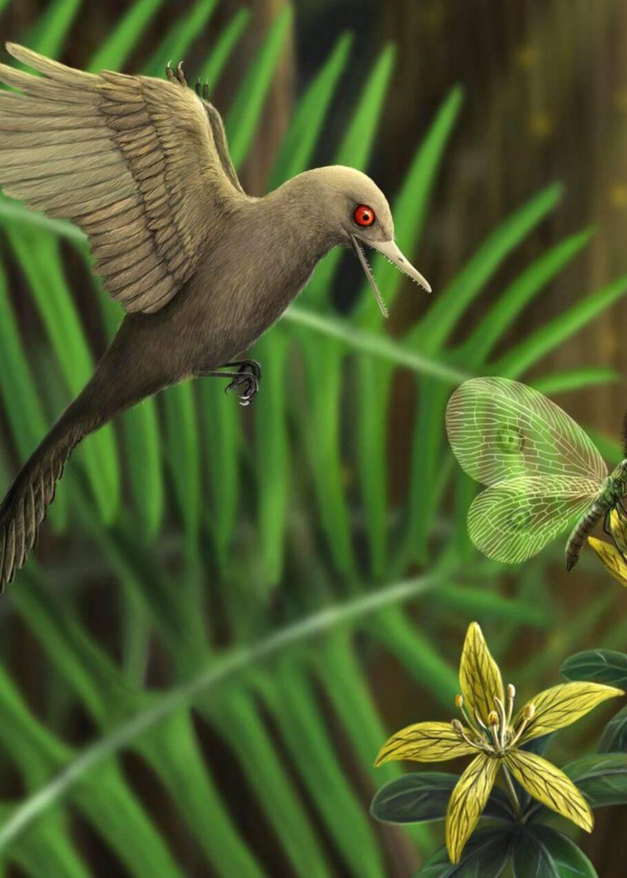 Un minuscule dinosaure vieux de 99 millions d'années découvert figé dans l'ambre