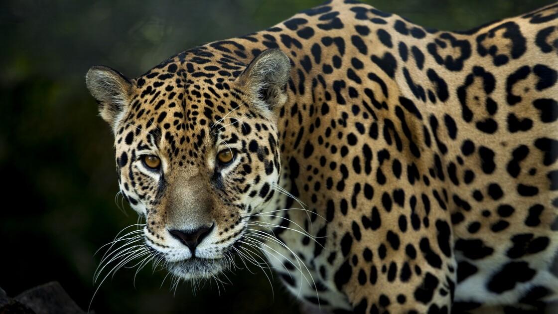 """""""Nous n'avons plus le temps"""" : après la COP13, quel bilan pour la sauvegarde des animaux sauvages ?"""