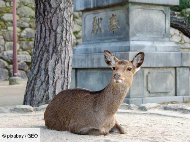 Coronavirus : des animaux sauvages en danger à cause de l'absence des touristes ?