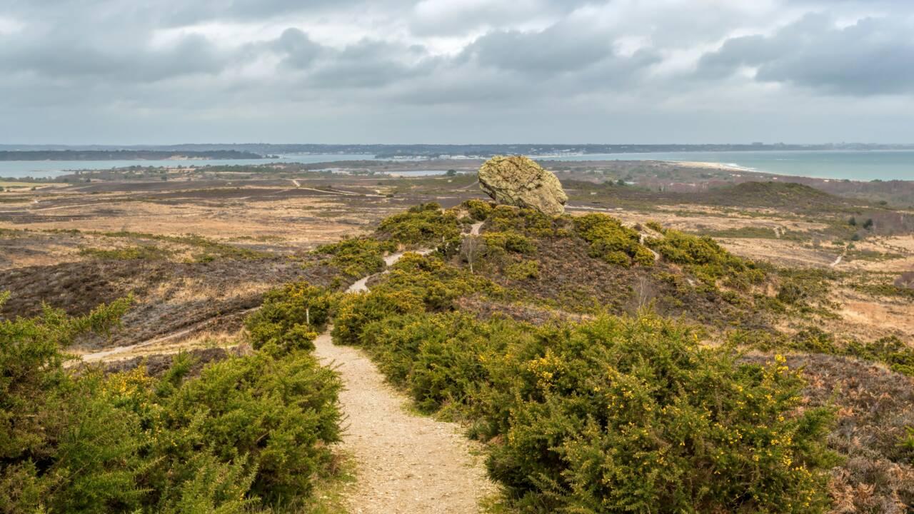 """Le Royaume-Uni crée sa première """"super"""" réserve naturelle nationale dans le Dorset"""