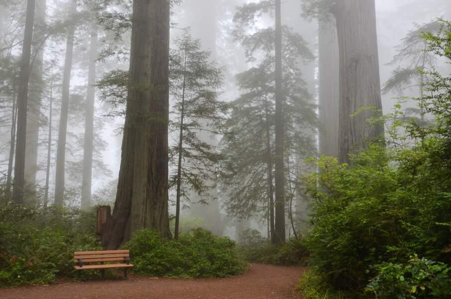 Sequoia National Park en Californie aux Etats-Unis