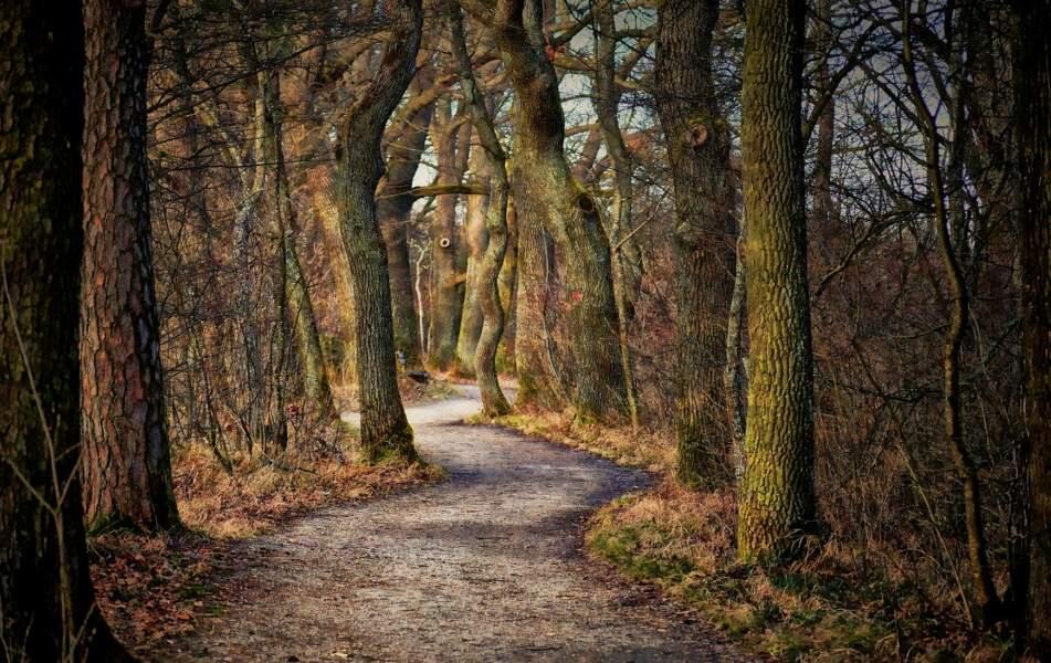 Balades surprenantes en forêt