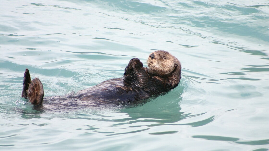 Pendant le confinement, visitez virtuellement l'aquarium de la baie de Monterey