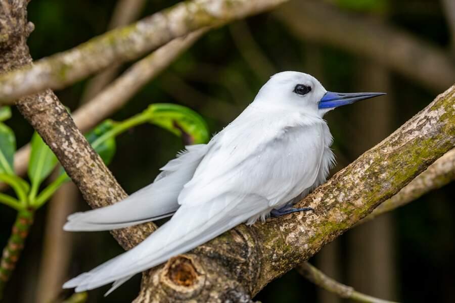 Aux Seychelles, on aime les drôles d'oiseaux