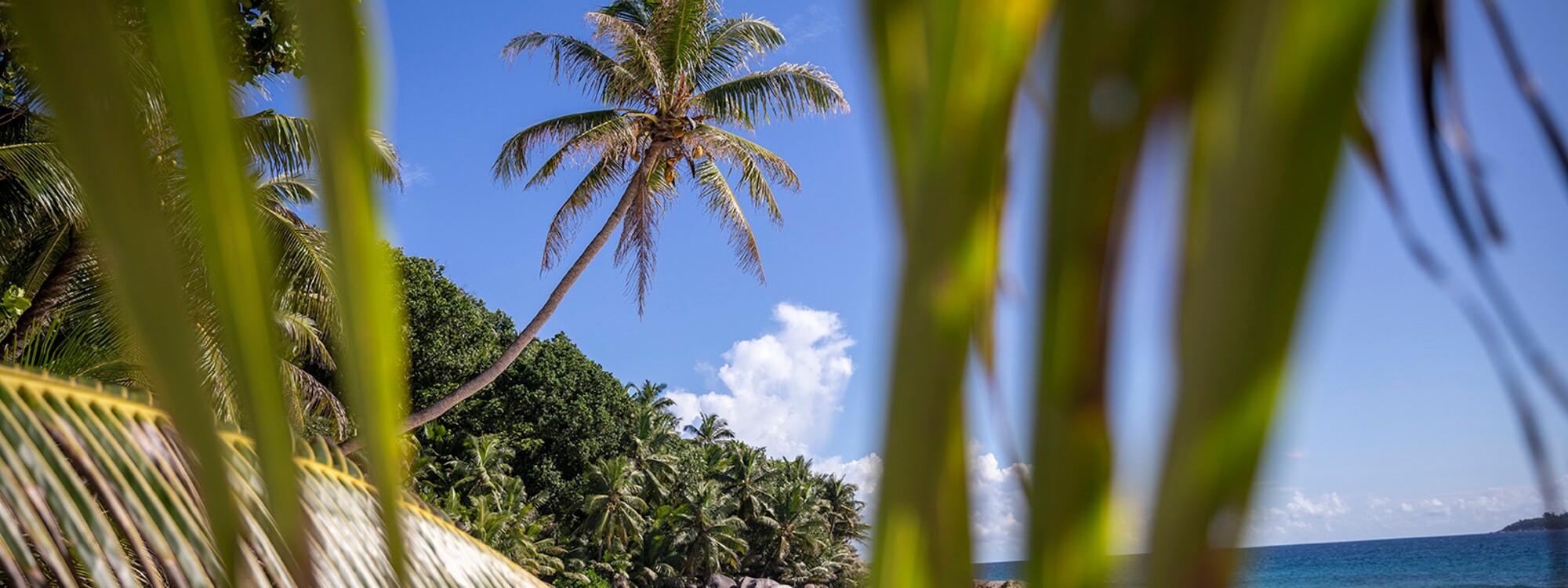 Podcast : les Seychelles au-delà de la carte postale
