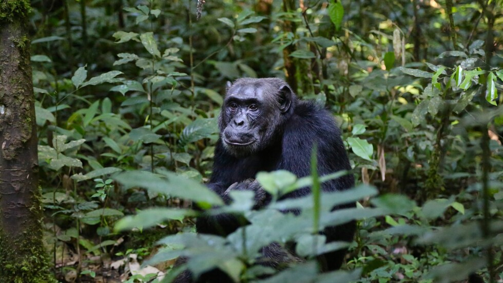 Certains animaux pratiquent aussi la distanciation sociale pour éviter les maladies