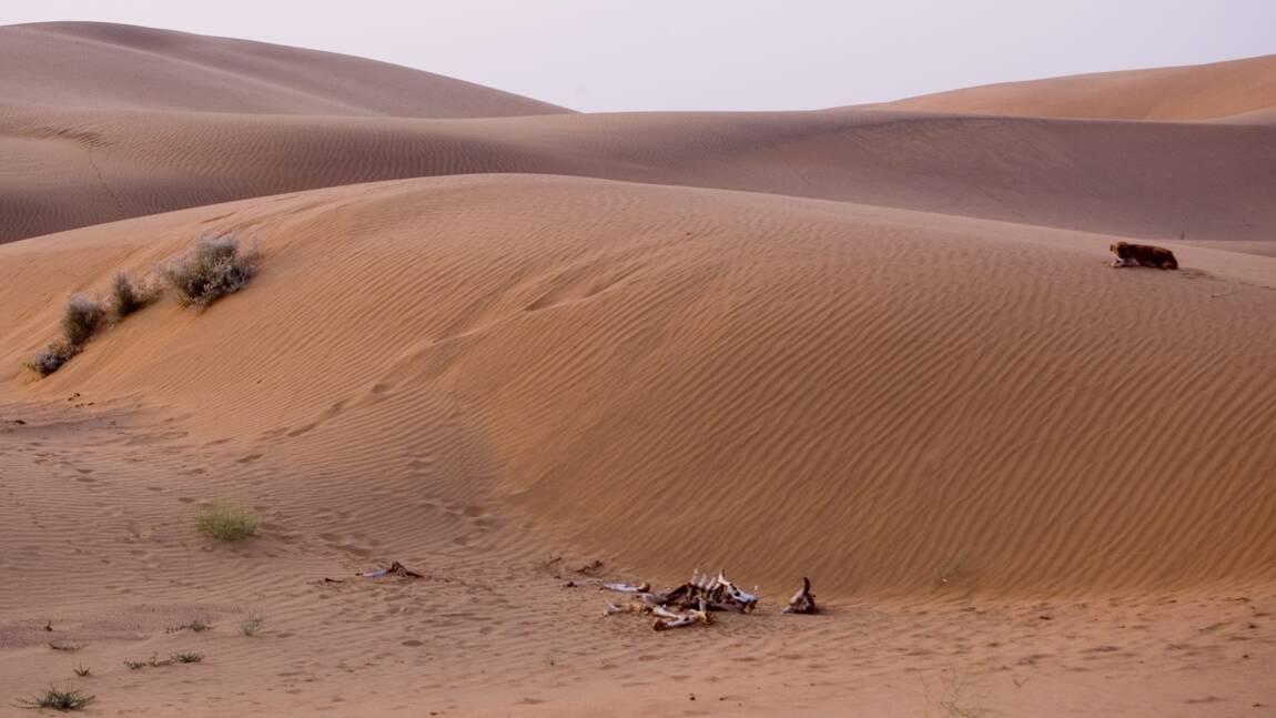 Des ossements témoignent de la plus vieille boucherie du continent africain découverte au Maroc